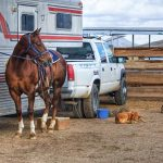 Ways to Purchase A Horse Trailer Right
