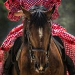 Keeping your Horse Safe when Riding