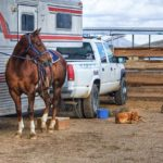 Ways to Purchase a Horse Trailer